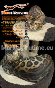 Female ,Male born 07.04.2021 Color n24 Snow carrier location Russia